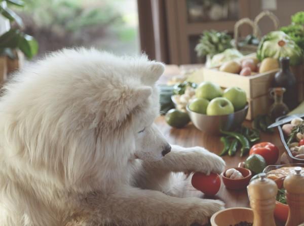 vegetarisches-Hundefutter-selber-kochen